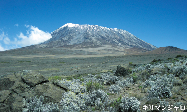 キリマンジャロ(5895m)登頂とタランギレ国立公園サファリ 11日間
