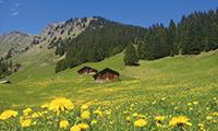 スイスの高山植物と鉄道を楽しむ旅 スイスアルプス フラワーハイキング