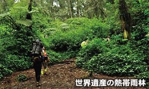 世界遺産の熱帯雨林は秘境感たっぷり