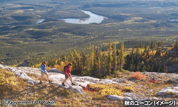 黄葉とオーロラの旅 秋のユーコンハイキング