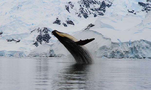 南極探検旅行 南極半島ハイキングと氷山クルーズ 3月の南極の魅力とは