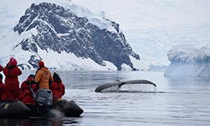 南極探検旅行 ヴィルヘルミナ湾