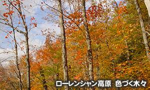 ローレンシャン高原 色づく木々